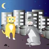 Het paar van de kat Stock Afbeeldingen