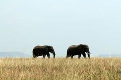 Het Paar van de olifant Stock Afbeelding