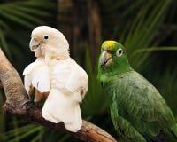 Het Paar van de papegaai Stock Afbeelding