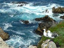 Het paar van de zeemeeuw het bekijken landschap Stock Afbeeldingen