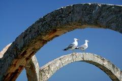 Het paar van Gul op de Zwarte Zee royalty-vrije stock afbeelding