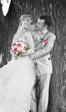 Het paar van het huwelijk op de achtergrond van een boomboomstam Royalty-vrije Stock Foto's