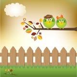 Het paar van vogels in liefde Stock Foto