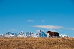 Het paard Royalty-vrije Stock Fotografie