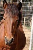 Het paard Royalty-vrije Stock Afbeeldingen