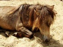 Het paard Royalty-vrije Stock Foto's