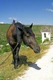 Het paard Stock Afbeeldingen