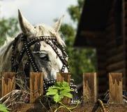 Het paard is achter de omheining royalty-vrije stock fotografie