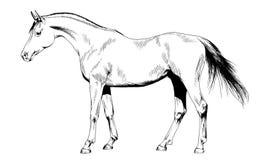 Het paard dat in inkt met de hand wordt getrokken Royalty-vrije Stock Afbeeldingen