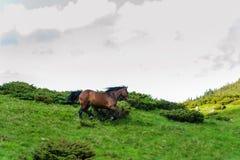 Het paard dat op de achtergrond van de hemel en de wolken loopt stock afbeelding