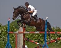 Het paard dat toont springt Stock Fotografie