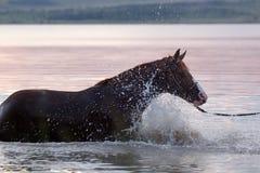Het paard dat van de kastanje zich in het water bevindt Royalty-vrije Stock Fotografie