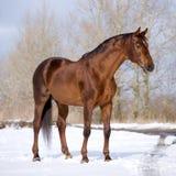 Het paard dat van de kastanje zich op gebied bevindt royalty-vrije stock afbeeldingen