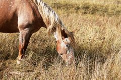 Het paard in de herfst Royalty-vrije Stock Foto's