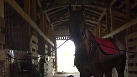 Het paard is in de stal stock footage