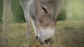 Het paard die van Nice groen gras, hoofdclose-up eten royalty-vrije stock foto