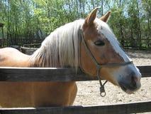 Het paard, Dieren, Zonnige dag, stelt aan camera royalty-vrije stock foto's