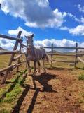 Het paard in drijft bijeen Stock Foto