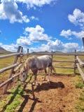 Het paard in drijft bijeen Stock Fotografie