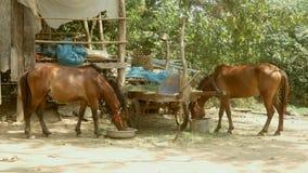 Het paard eet gras, paard het voeden voedsel stock videobeelden