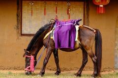 Het paard eet gras voor het Chinese huis royalty-vrije stock foto