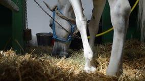 Het paard eet hooi