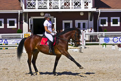 Het paard en de ruiter van de dressuur Stock Afbeeldingen