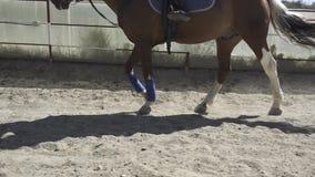 Het paard gaat naar het circus stock videobeelden