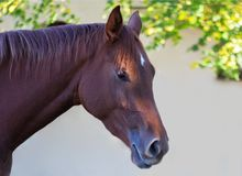 Het paard geniet van de de herfstzon Royalty-vrije Stock Foto