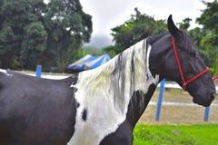 Het paard Haras in Rio de Janeiro Royalty-vrije Stock Foto