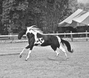 Het paard Haras in Rio de Janeiro Royalty-vrije Stock Afbeeldingen