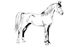 Het paard in inkt wordt getrokken die Stock Foto