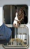 Het paard kan niet aan het Hooi krijgen Stock Foto's