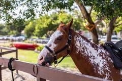 Het paard kauwt op omheining Royalty-vrije Stock Afbeelding