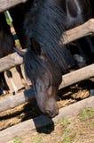 Het paard kijkt uit de schuur. Royalty-vrije Stock Afbeelding