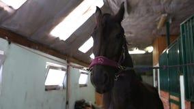 Het paard klapt lippen stock footage