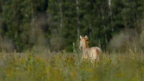 Het paard loopt weg stock video