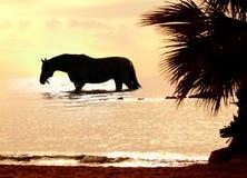 Het paard in mariene zonsondergang Stock Fotografie