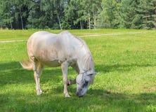 Het paard op een weide Stock Foto's