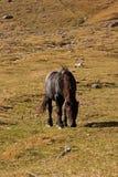 Het paard op weiland Stock Foto