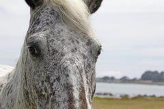 Het paard staart Royalty-vrije Stock Fotografie