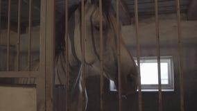 Het paard in stallen stock videobeelden