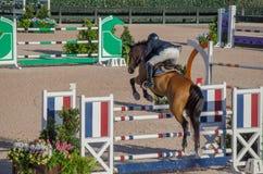 Het paard toont het Concurrerende Springen Royalty-vrije Stock Afbeeldingen