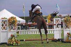 Het paard toont het springen stock afbeeldingen
