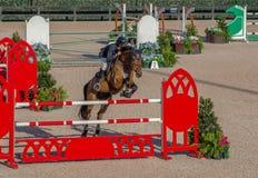 Het paard toont het springen bij een grote gebeurtenis Royalty-vrije Stock Foto's