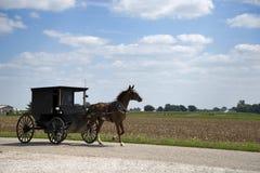 Het paard van Amish en met fouten stock fotografie
