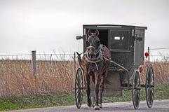 Het paard van Amish en met fouten royalty-vrije stock fotografie