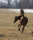 Het paard van Bucking Royalty-vrije Stock Afbeeldingen