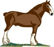 Het paard van Clydesdale Stock Fotografie