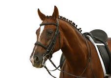 Het paard van de baai Royalty-vrije Stock Afbeelding